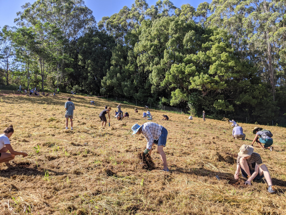One Tree Planted reforestation activities in Australia, Northern Rivers, 2020. Courtesy of One Tree Planted.