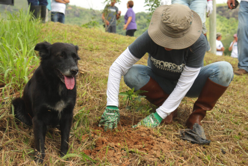 One Tree Planted reforestation activities in Brazil, 2019. Courtesy of One Tree Planted.
