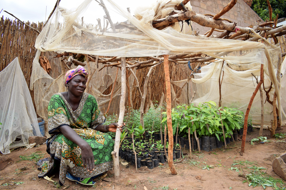Trees for the Future's seedling nursery, Kaffrine, Senegal. Courtesy of Trees for the Future.